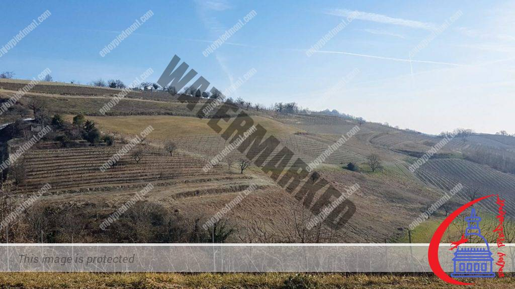 The hills of Monferrato