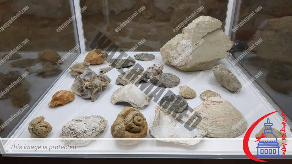 Fossilized seashells - Eco-museum, Cella Monte