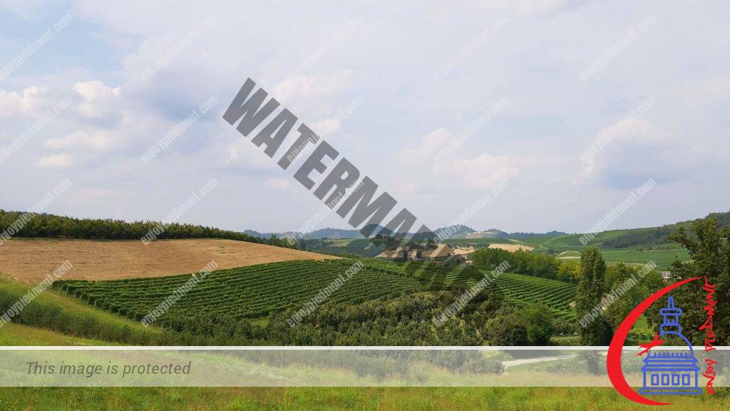 Hills of the Langhe