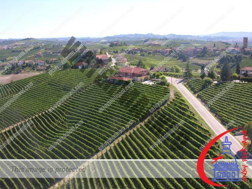 Wine Barbaresco vineyards